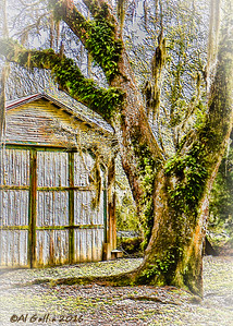 """'Two Old Buddies'; 100 year old boat house amd guardian oak at Avery Island Jungle Garden, Louisiana. """"...Time is like a rairoad train, A one-way ticket - no turning back. And the prayer of every passenger is to stay securely on the track..."""" Excerpt from Where Did All the Decades Go by John & Edna Massimilla. ©Al Gallia"""