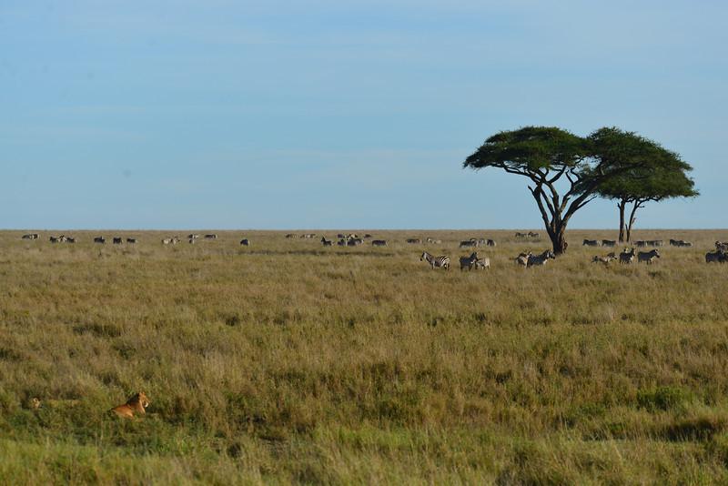 East Africa Safari 315.jpg