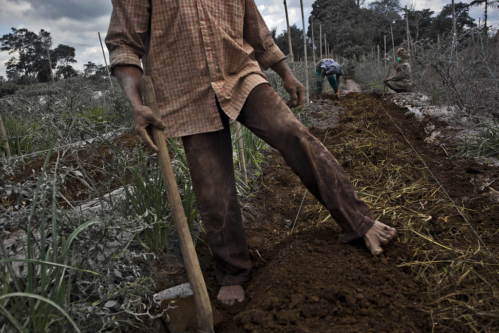 . Villagers work in their field which has been covered by ash from eruption of mount Sinabung in Sigarang Garang village on November 25, 2013 in Karo district, North Sumatra, Indonesia.  (Photo by Ulet Ifansasti/Getty Images)