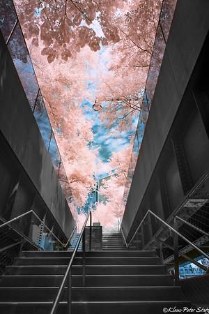 High Line (IR) August 2020