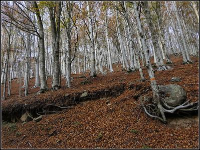 Monte Amiata (Grosseto e Siena)