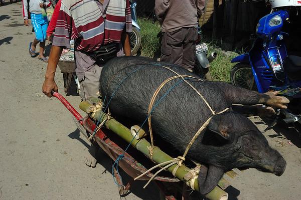 Market Day in Rantepau