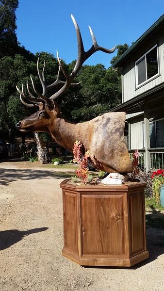 Tule Elk Pedestal Mount