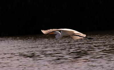 Birds & Nature, El Dorado Lodge and Minca