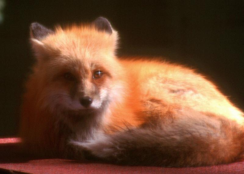 fox28.jpg