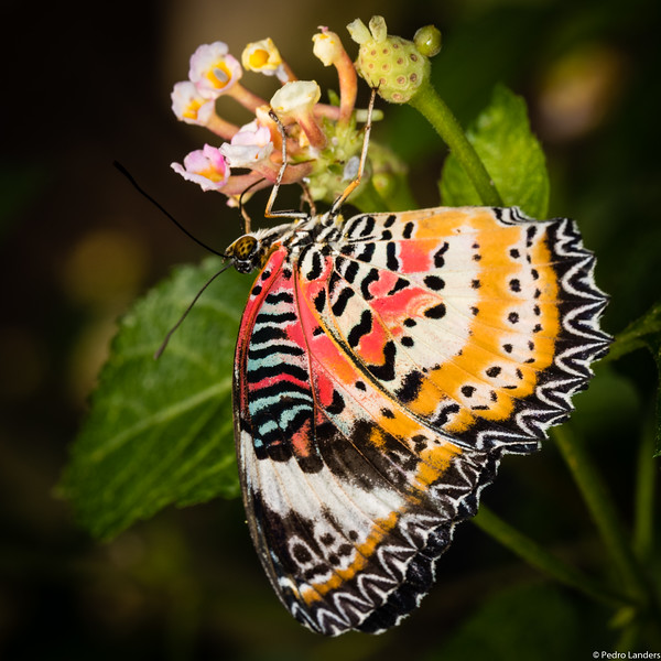 Butterfly Place 3