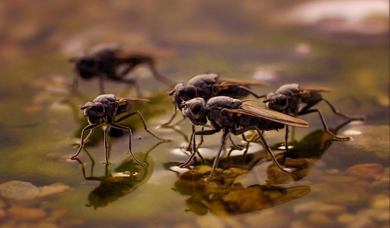Bugs and Beetles - 167.jpg