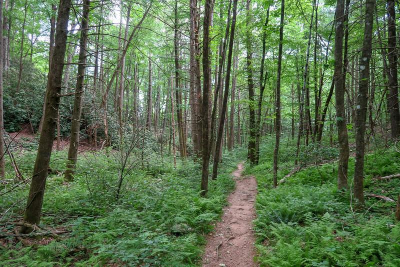 Sycamore Cove Trail -- 2,540'