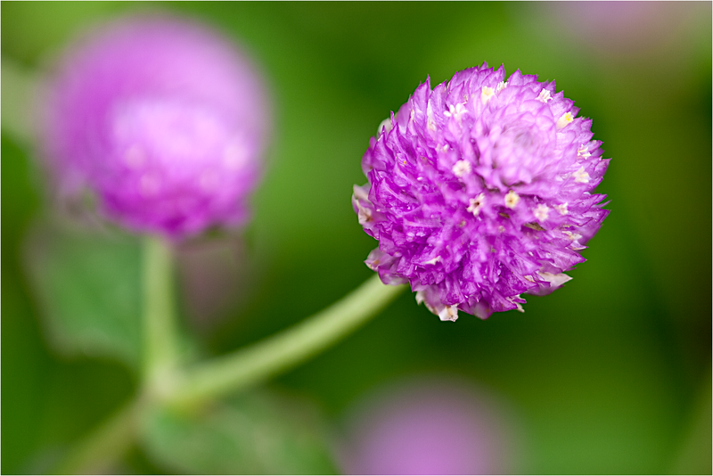 20110926_Flower_9.png