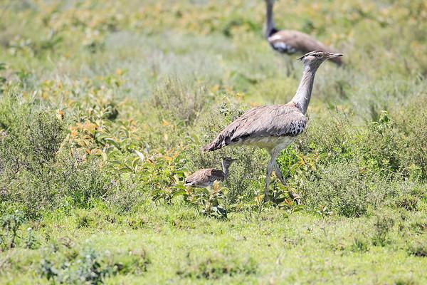 Birds Tanzania 2006 2009 2010 2016
