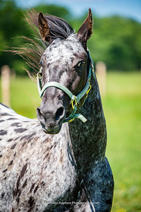 Stéphanie Galipeau, Louna the Appaloosa
