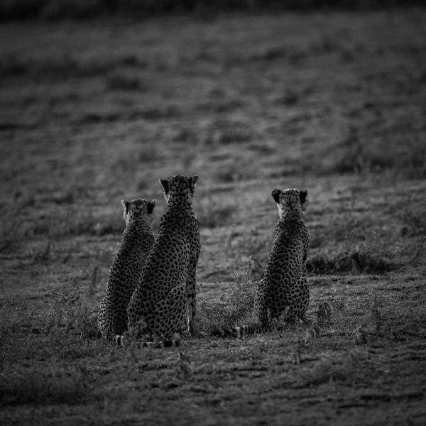 Tanzania_Feb_2018-115.jpg