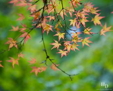 2014-10 Japanese Garden