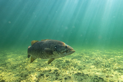 Video: Face To Face With A Smallmouth Bass!