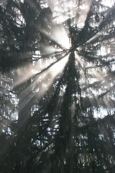Sun shining through the treetops at Lake Junaluska, NC