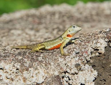 Insects & Lizards