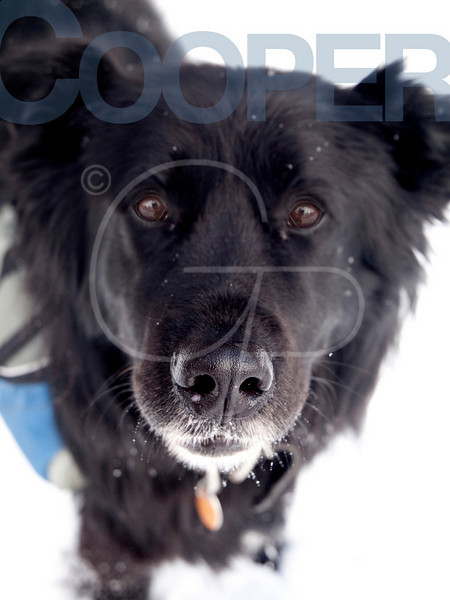 Cooper10b2 copy.jpg