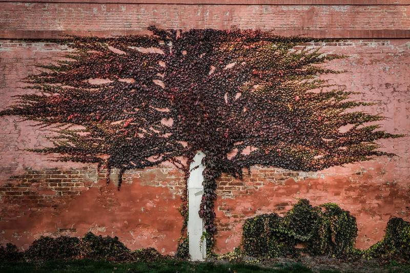 brevnov stromy-002.jpg