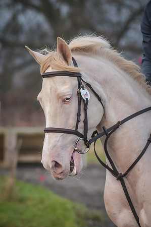 Lincomb Equestrian centre Arena Eventing 17th December 2016