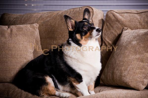 Schock Pet Portraits