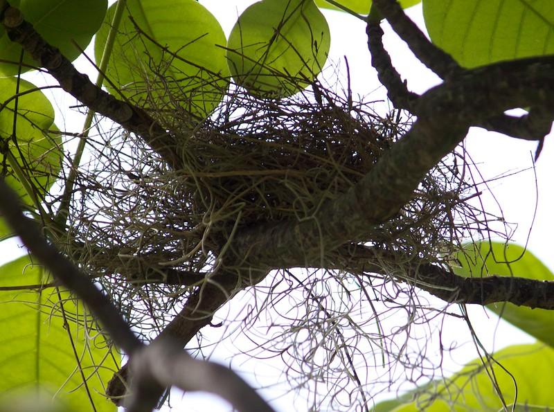 cardinal nest day 3