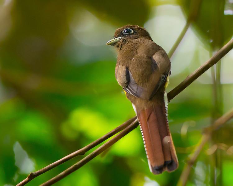 BirdDRM_9565.jpg