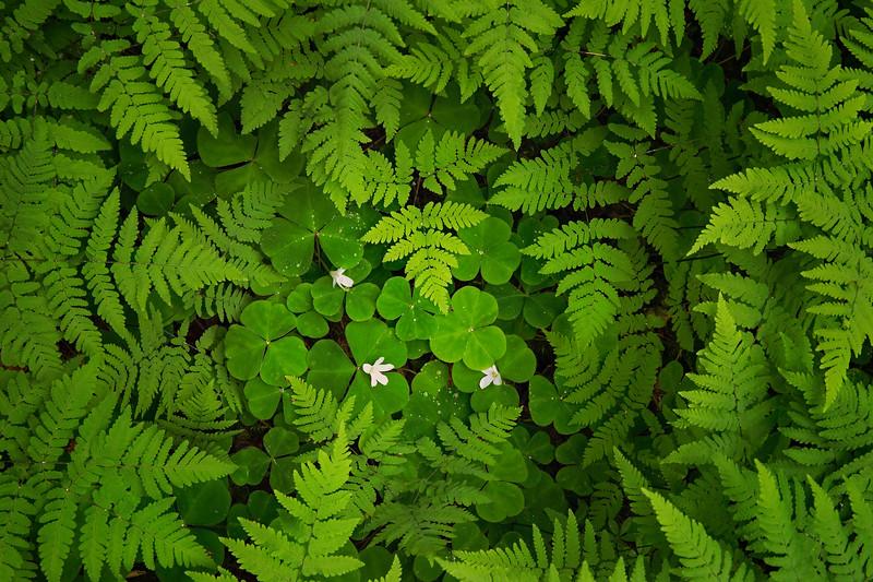 forest floor.jpg