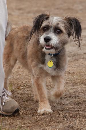 Dog Park 2010