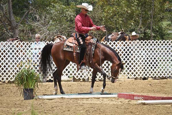 Arabian Trail Jr Horse Championship