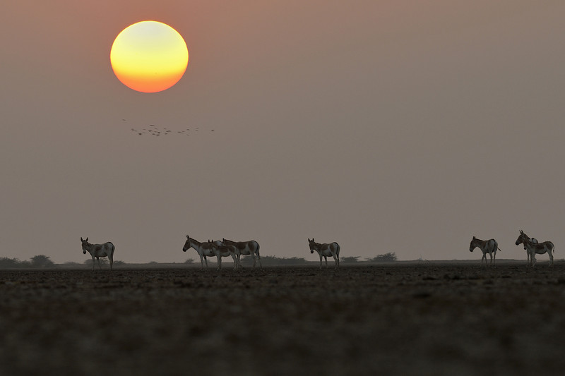 Wild-Asses-Sunset copy.jpg