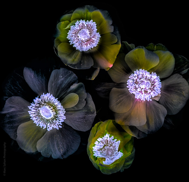 Illuminated Flowers