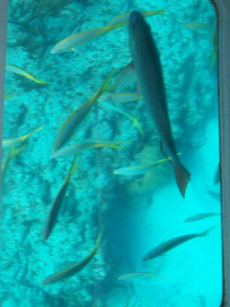 Oh, a big fish!