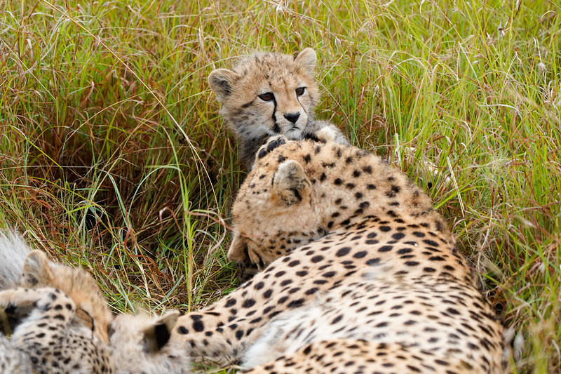 safari-2018-146.jpg