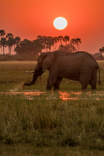 Sunset and Elephant
