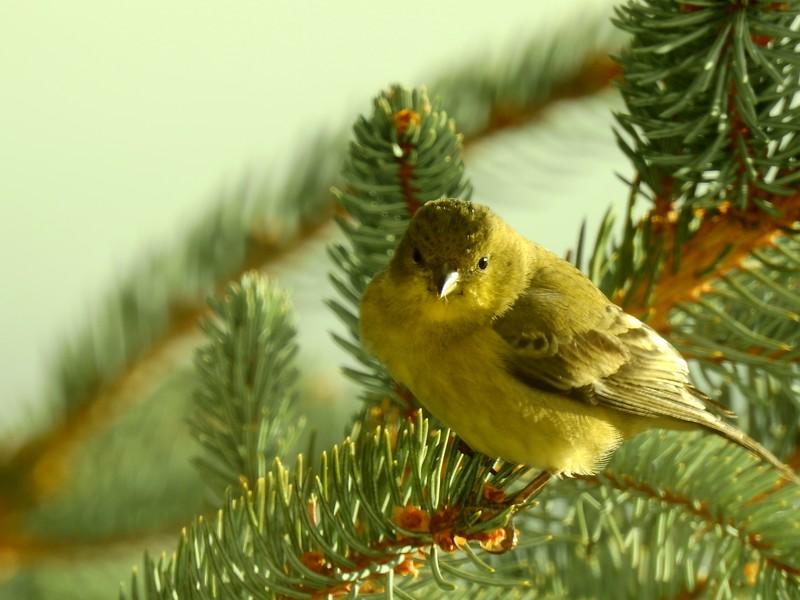 birds (132).JPG
