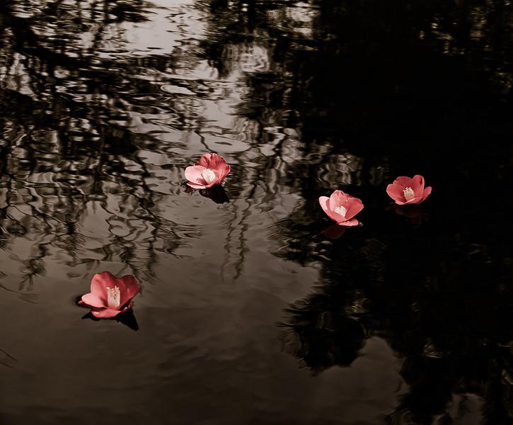 Japanese roses
