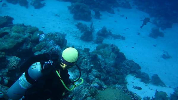 Palau Dive videos