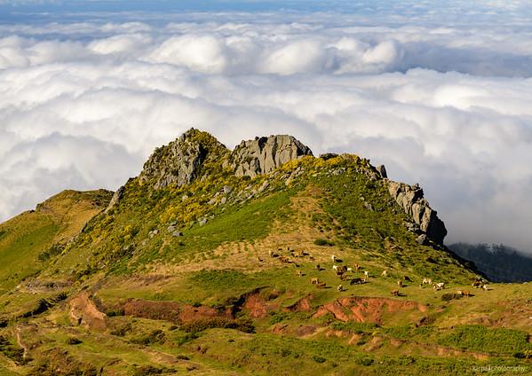 Madeira – Levada do Alecrim