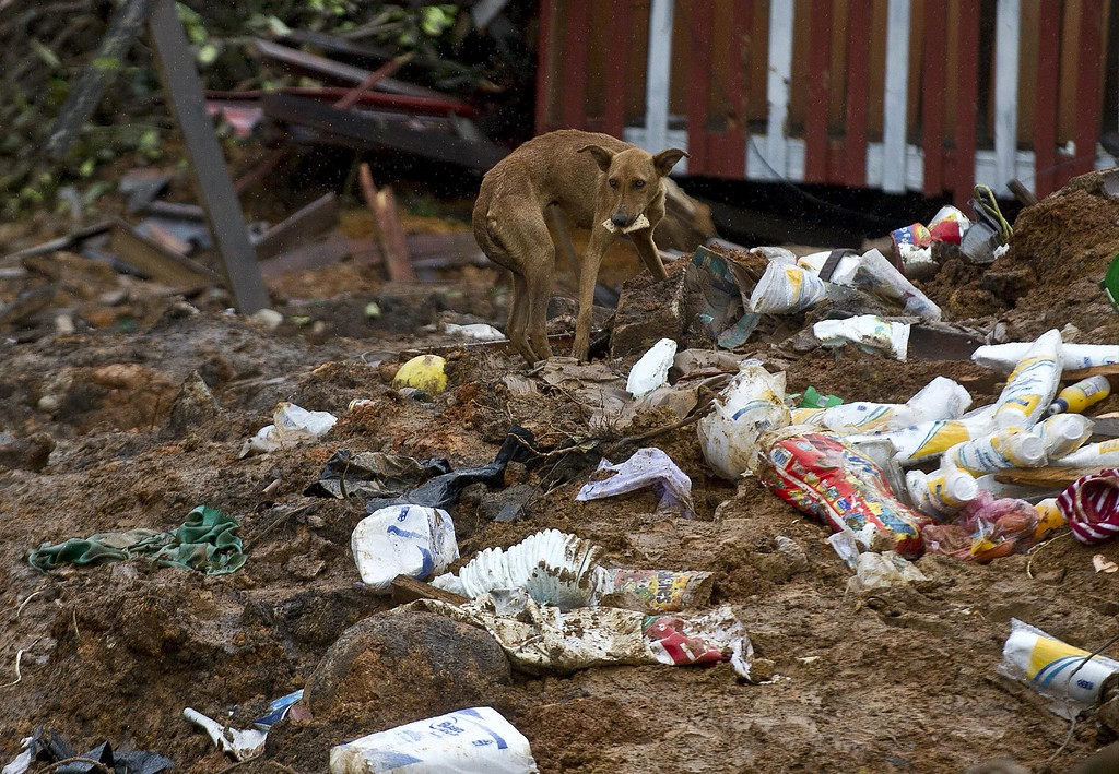 . A stray dog rummages for food among debris in La Pintada, state of Guerrero, Mexico, on September 19, 2013 as heavy rains hit the country.  AFP PHOTO/RONALDO  Schemidt/AFP/Getty Images