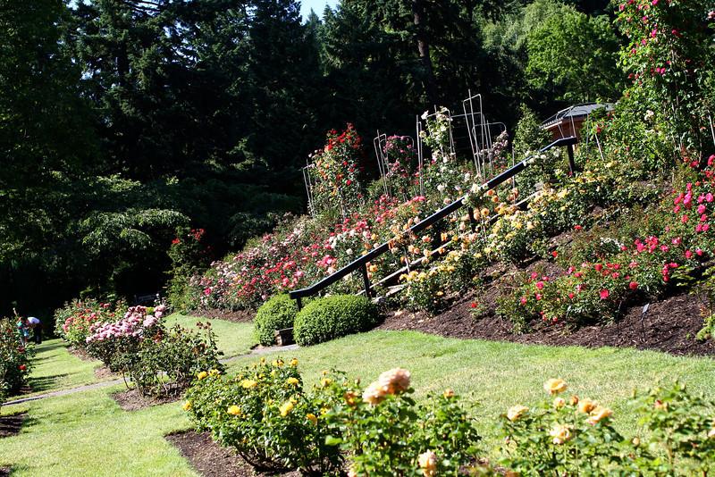 Portland International Rose Test Garden  2214.jpg