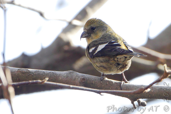 Birding 2012 November