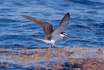 2007 Outer Banks Pelagics