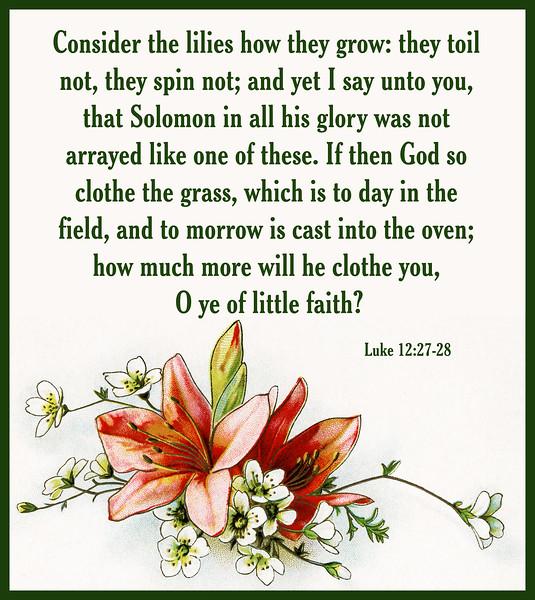 v-Luke-12-27-28-lilies-orange-ODS.jpg