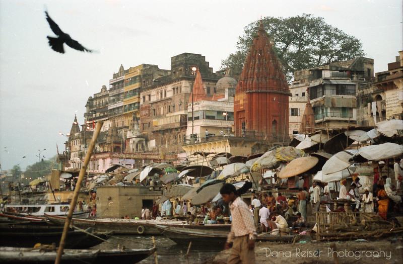VaranasiBird.jpg