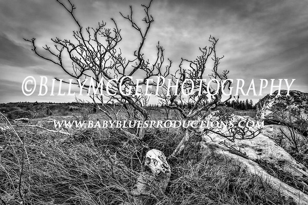 Dolly Sods Wilderness Area - 10 Oct 2014