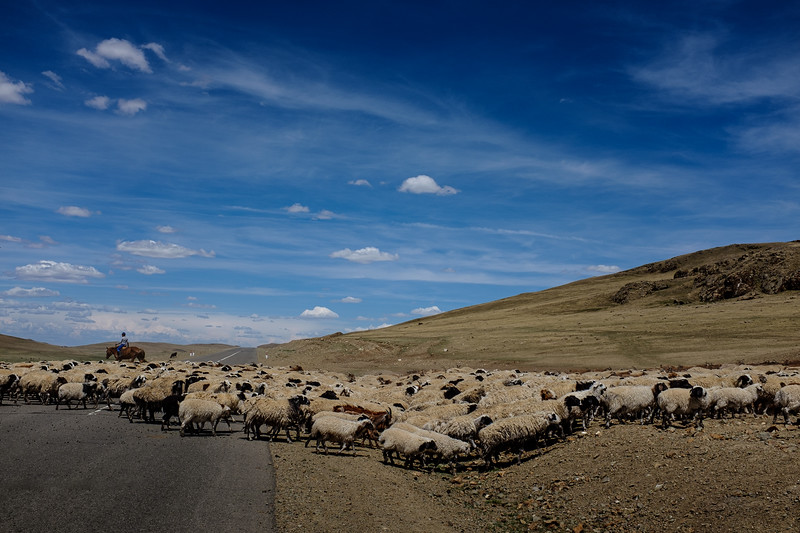 nature outdoors sheep road mongolia natgeo travel adventure landscape-1.jpg
