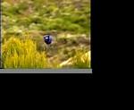 Carl Gerhardt's Videos