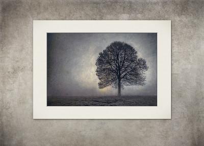 Tree of Life - $5