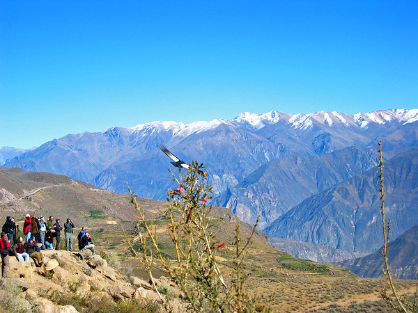 Peru in Condorvlucht