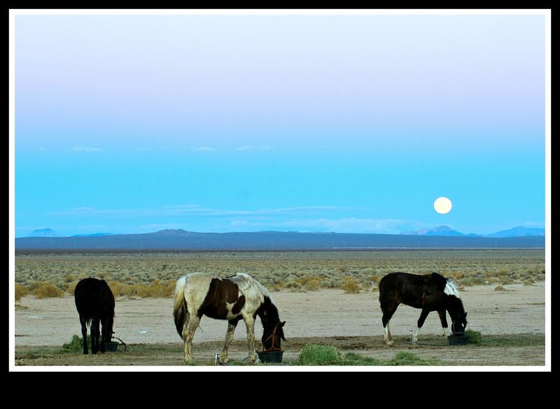 Amazing Moonrise on the desert.